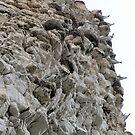 Chalk cliffs and....Seagulls at Flamborough UK by patjila