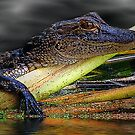Reptiles by George  Link