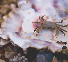 Little Crabby by photodivaanna
