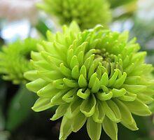 ~ Gorgeous Greens ~ by Brenda Boisvert