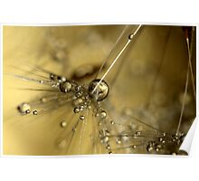 Droplets Of Gold Poster