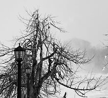 Niagara Falls Winter Tree by OsirisPQ