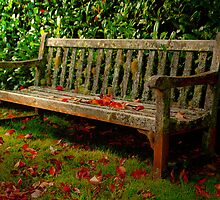 The Bench ... Mt Wilson in Autumn by Rosalie Dale