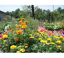 Spring at the Springfield Nursery Photographic Print