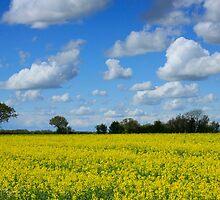 All Yellow & Blue by Cyrusdvirus