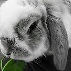 Old Bunny by goingdown
