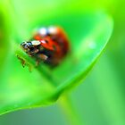 Ladybirds on green by Lucy Martin