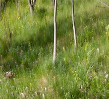 Saplings in Spring by Lynn Wiles