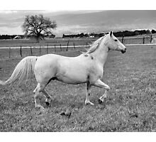 The Trot Photographic Print