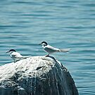 One Good Tern Deserves Another by Mike Oxley