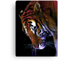 Grace of a Tiger Canvas Print