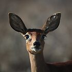 Morning Buck - Langebaan by Nick Bradshaw