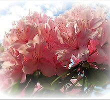 ~ Rhododendron ~ by Brenda Boisvert