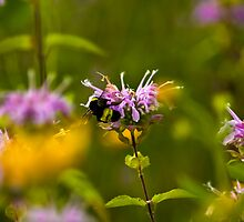 Flowers & Bumble Bee by Packy  Savvenas