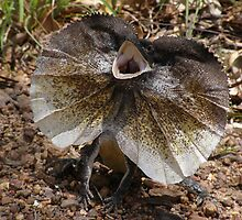 Frill-necked Lizard by weigi