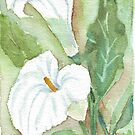 Zantedeschia (Arum Lily) by Maree Clarkson