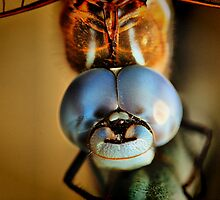 Dragonfly Up Close by Barbara  Brown