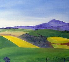 Canola fields by Elizabeth Kendall