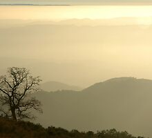 View from Mount Diablo by kattand