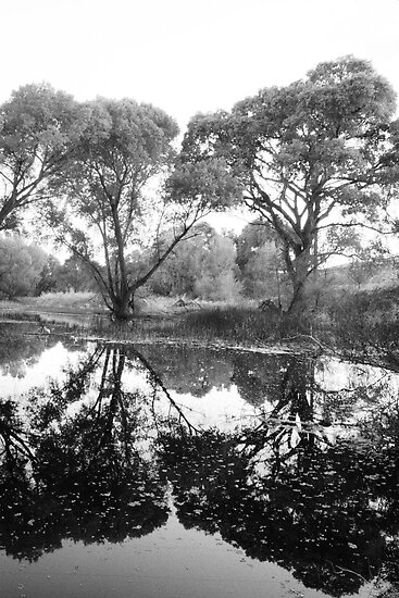 Tree Vanity by Bob Larson