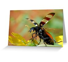 *CEROCTIS CAPENSIS* - IN ALL MY GLORY....HERE I COME! THE SPOTTED  BLISTER BEATLE! Greeting Card