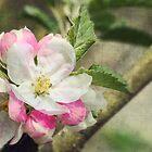 Spring Blossom by Amanda White