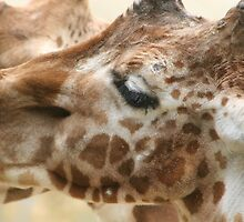 Giraffe by wingsyves