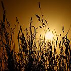 gold dusk by Ingz