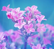 Flora Bella by ©Maria Medeiros