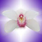 Snowsprite - Cymbidium orchid hybrid - Orton Effect by Jan Clarke