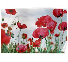 Field of Poppies Against Grey Sky  Poster