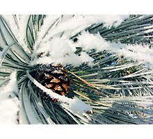Wrapped in Frost Photographic Print