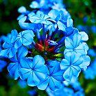 Blue by kris clark