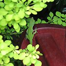 English Bench-Anole by JeffeeArt4u
