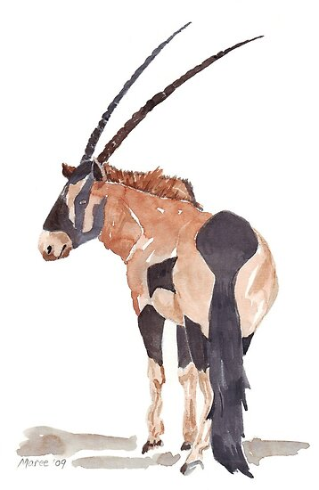 Gemsbuck (Oryx gazella) by Maree  Clarkson
