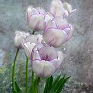 Soft Texture Tulips by digitalmidge