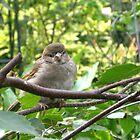'Baby robin' by HannahT