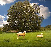 The Boredom Of Sheep by Nigel Finn