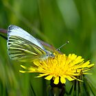 Green-veined White by Moonlake