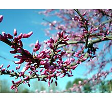 The Colors of Spring Photographic Print