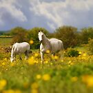 Golden Buttercups Of Springtime by WOBBLYMOL