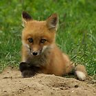 baby fox by creativegenious