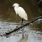 Egret at Coyote Hills Fremont California by OPTATIVE