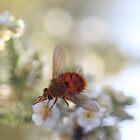 Grand Canyon Bug Macro shot by OPTATIVE
