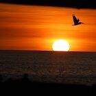 sunsetting pelicans. by Amanda Huggins