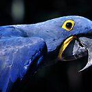 "Feeling ""Blue"" today.............. by Dennis Stewart"