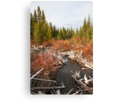 Dam creek  Canvas Print