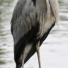 Grey Heron 2 by Paul Dean