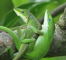 An Intiment Moment - Anole Mating by JeffeeArt4u