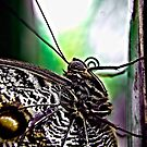 Utterly Butterly by Liam Diamond